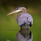 GBH reflection by Daniel  Parent
