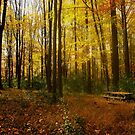 Autumn Haven--Ridley Creek State Park by MsKimberly