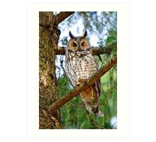 LEO - Long Eared Owl - Ottawa, Ontario Art Print