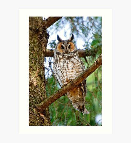 LEO - Long Eared Owl - Ottawa, Ontario Art Print