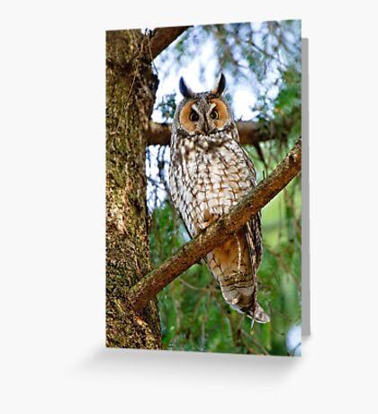 LEO - Long Eared Owl - Ottawa, Ontario Greeting Card