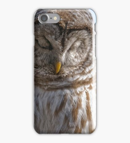 Barred Owl in Tree - Brighton, Ontario iPhone Case/Skin