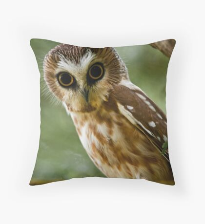 Northern Saw Whet Owl On Branch Throw Pillow