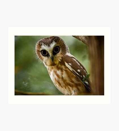 Northern Saw Whet Owl On Branch Art Print