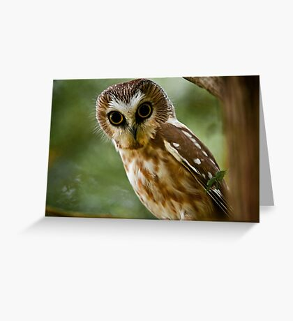 Northern Saw Whet Owl On Branch Greeting Card