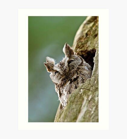 Screech Owl - Ottawa, Ontario Art Print