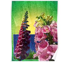 Two Foxglove flowers on texture and frame Poster