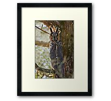 Long Eared Owl - Amherst Island, Ontario Framed Print