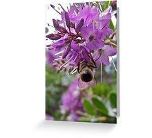 Hebe bee Greeting Card