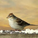 The Sparrow by Pat Moore