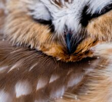 Northern Saw Whet Owl - Ottawa, Canada Sticker