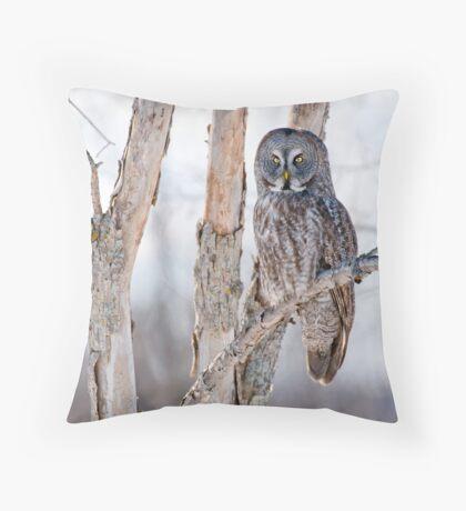 Great Grey Owl - Dunrobin Ontario Throw Pillow