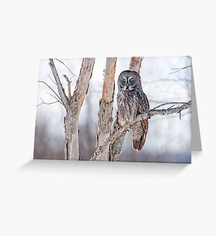 Great Grey Owl - Dunrobin Ontario Greeting Card