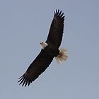 Soaring with Eagles 2 by Don Rankin