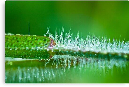 Water Spike  by aditya sakha  kusuma