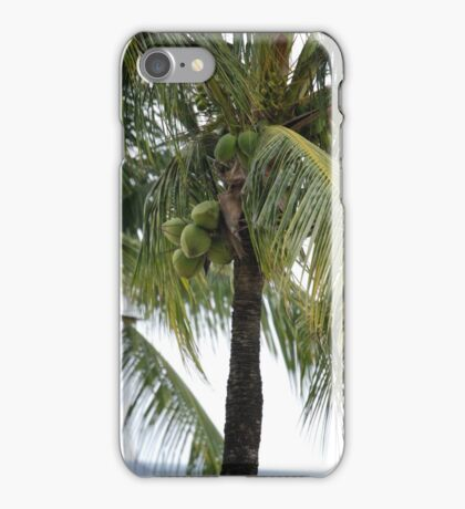 Barbados -- Coconut Theme I If you like, please purchase, try a cell phone cover thanks iPhone Case/Skin