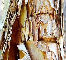 Paperbark Patterns by Penny Smith