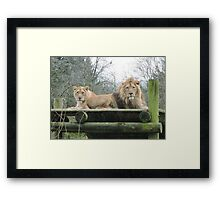 Mr & Mrs (Lion) Framed Print
