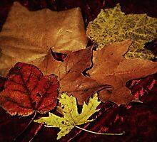 Autumn Leaf Collage by Linda Miller Gesualdo