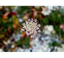 Vermont's Lace Photographic Print