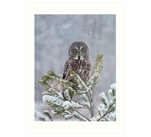 Great Gray Owl Art Print