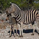 Zebra and Colt by naturalnomad
