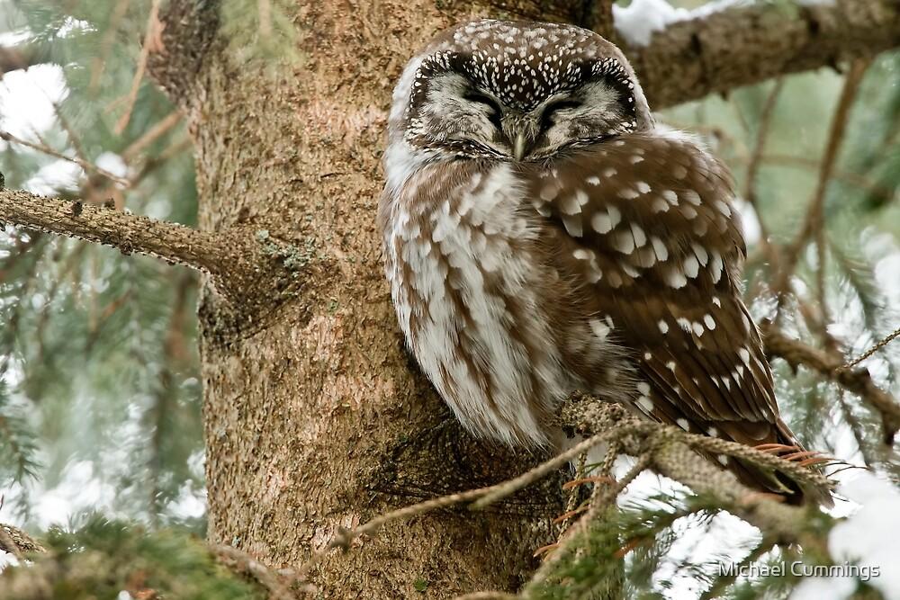 Boreal Owl by Michael Cummings