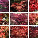 Westonbirt colours Red by John Dalkin