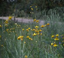 Roadside Wildflowers by garts