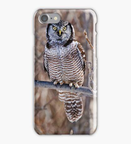 Northern Hawk Owl iPhone Case/Skin