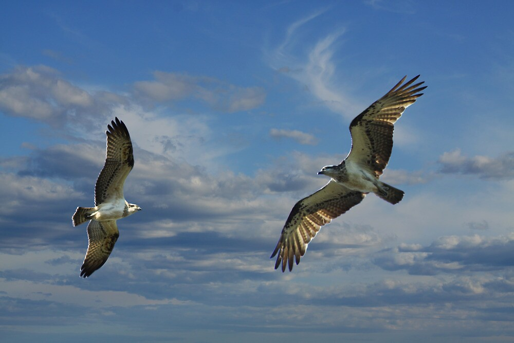 The Joy of Flight by byronbackyard