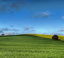 Green and Gold, Canowindra Pastures Panorama by Jason Ruth