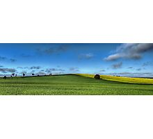 Green and Gold, Canowindra Pastures Panorama Photographic Print