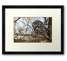 Boreal Owl Framed Print