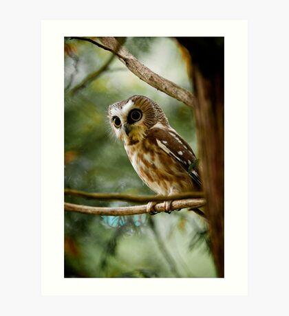 Northern Saw Whet Owl Art Print