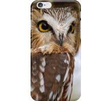 Saw Whet Owl - Amherst Island, Ontario iPhone Case/Skin