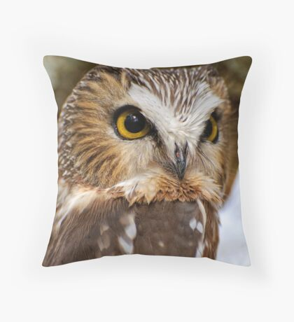 Saw Whet Owl - Amherst Island, Ontario Throw Pillow
