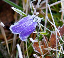 Frozen beauty by LadyFi