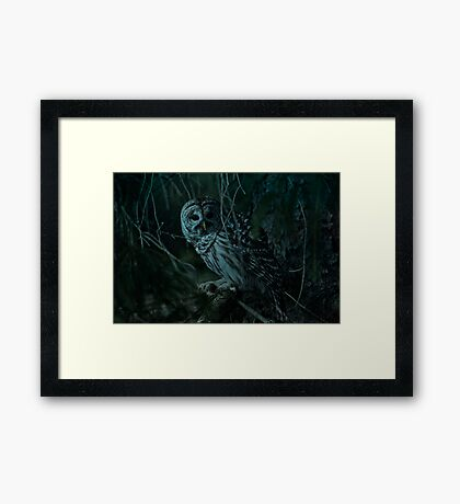 Barred Owl _ Pseudo Night shot Framed Print
