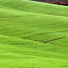 Tuscan Waves of Winter Wheat-near Siena by Deborah Downes