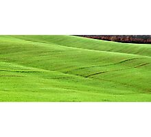 Tuscan Waves of Winter Wheat-near Siena Photographic Print