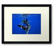 Whale Shark 2 - Ningaloo Reef Framed Print