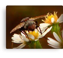 A Fly's Last Buzz Canvas Print