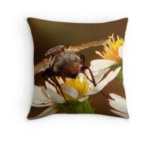 A Fly's Last Buzz Throw Pillow