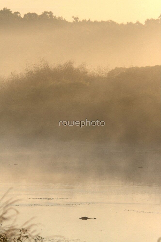 gator in the mist by rowephoto