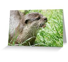 Asian Otter Greeting Card