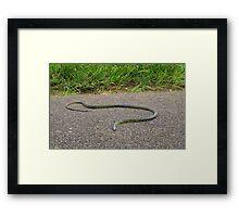 Far Nth Queensland Tropical Snake Framed Print