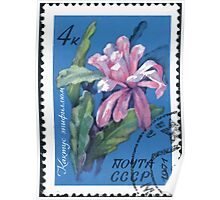 Tropical and subtropical plants Soviet Union stamp series 1971 CPA 4082 stamp Cactus Epiphyllum cancelled USSR Poster