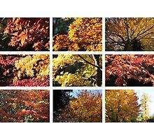 Westonbirt colours Yellow Photographic Print