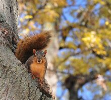 Squirrel - for heads/tails challenge by mltrue